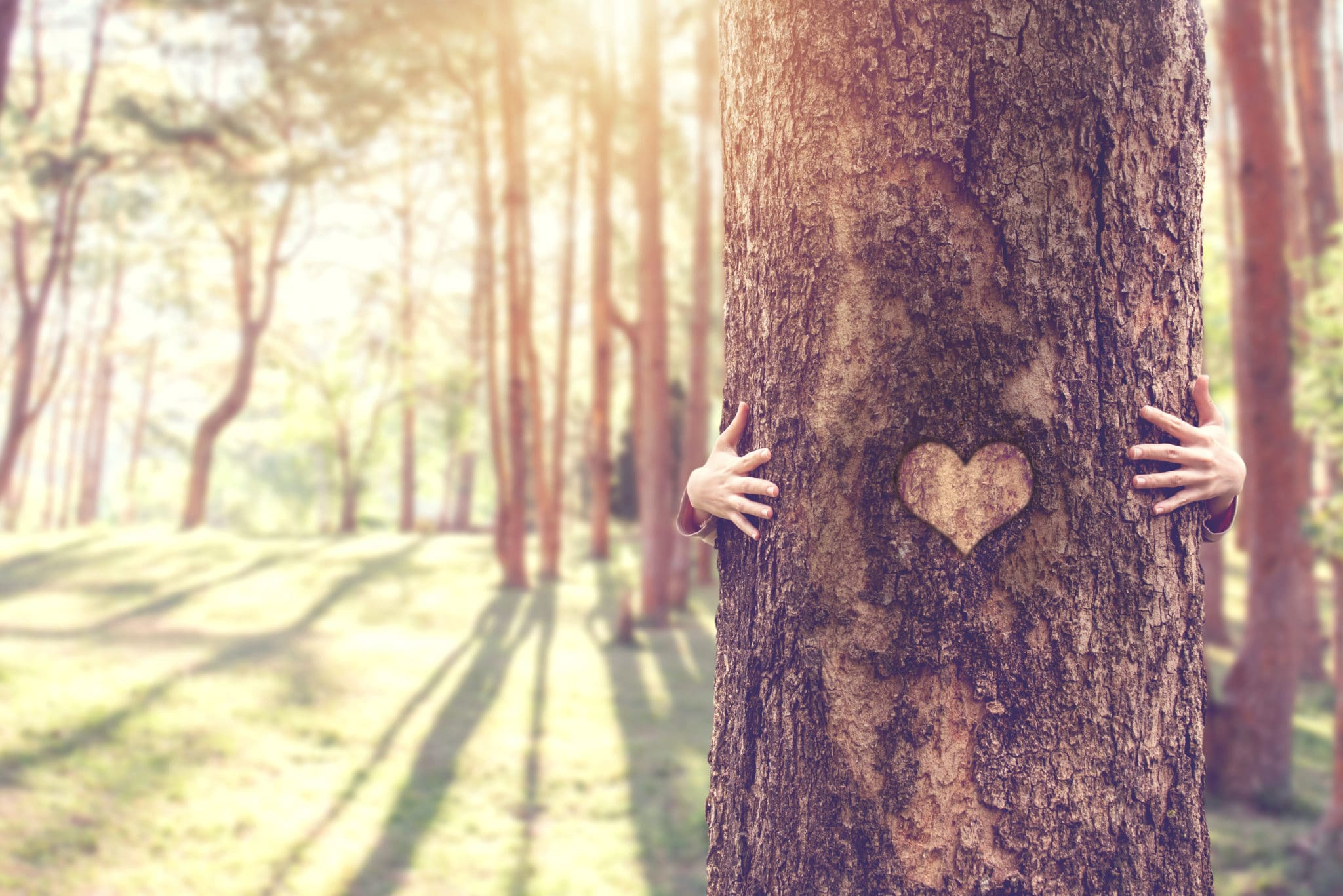 Closeup hands of woman hugging tree with heart shape, copy space.